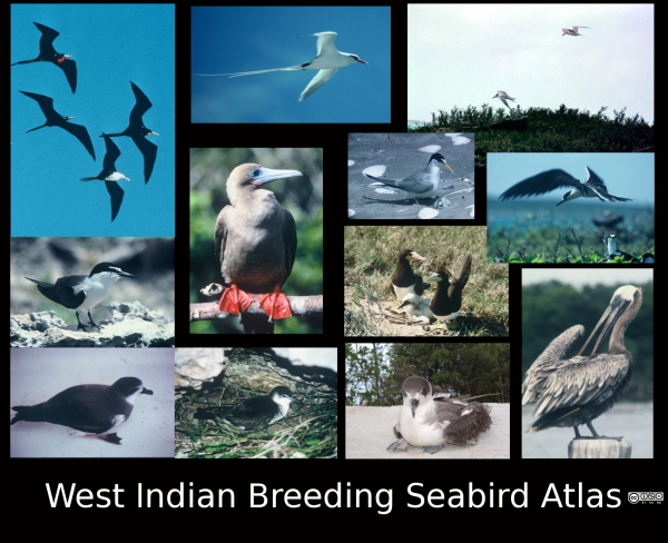 Montage of Seabirds of the West Indies