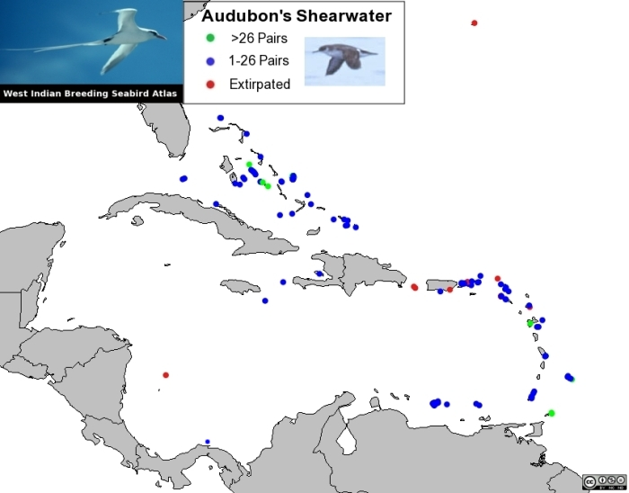Distribution of Audubon's Shearwater