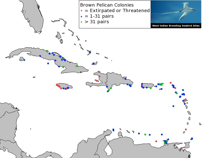 Brown Pelican Colonies in the West Indies