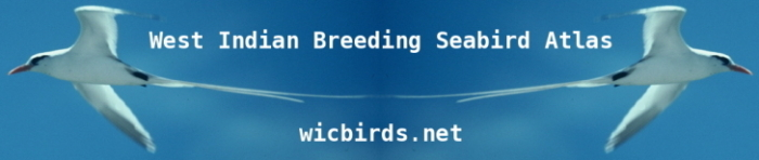 Wicbirds.net double-tropicbird logo
